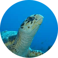 Jupiter Dive Center Learn to Dive