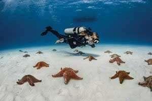 PADI Learn to Dive