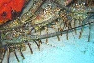 Lobster Season Safety Tips