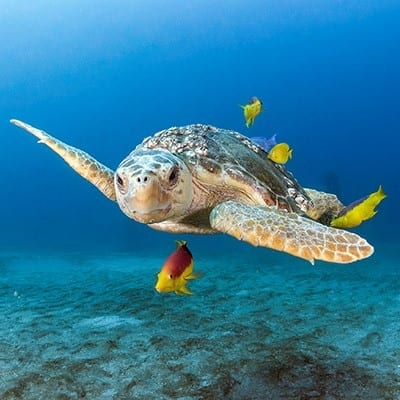 Jupiter Dive Center Turtle