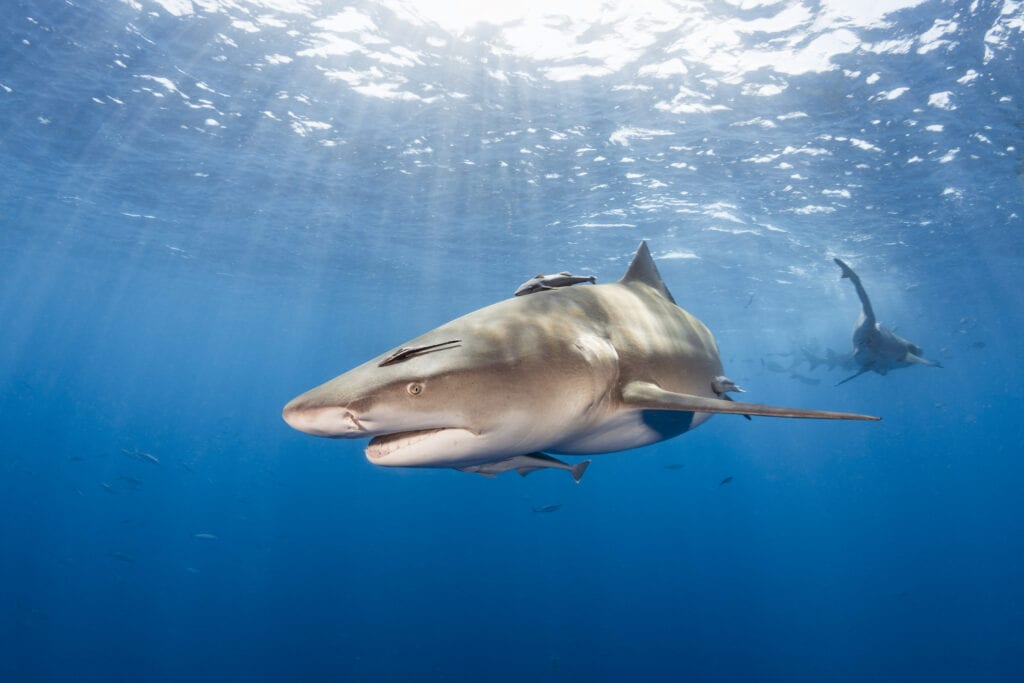 Shark Awareness January 2021