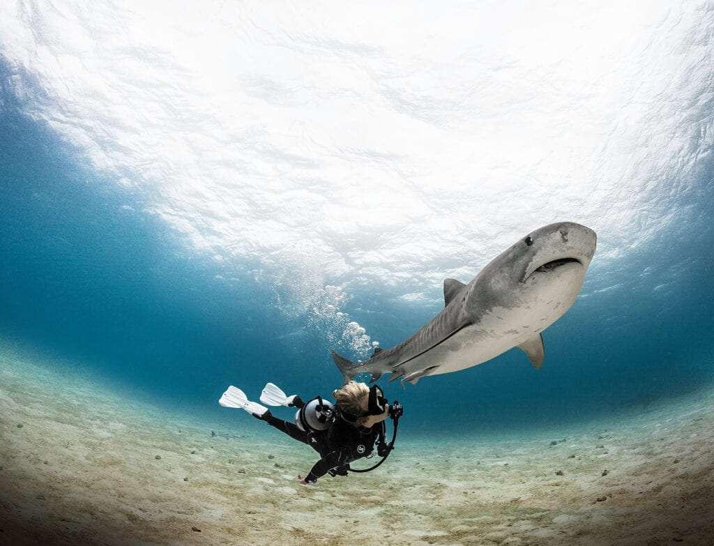 Solo Diver March 6th 2021.