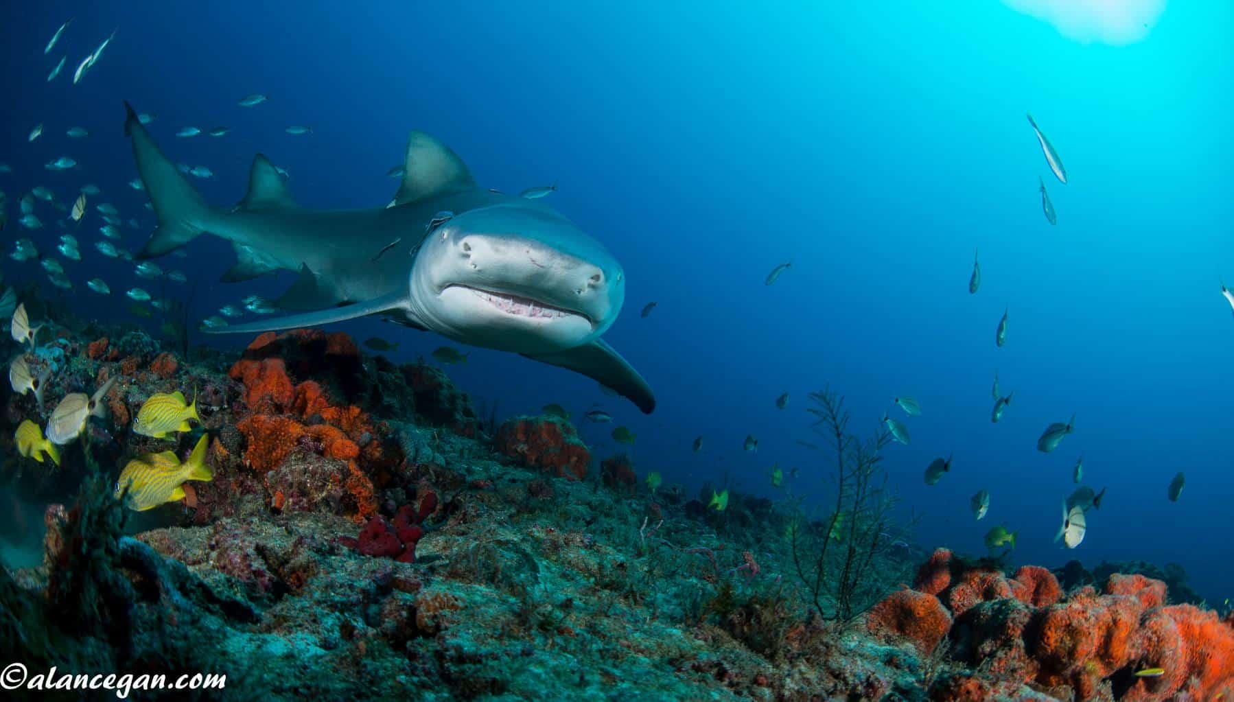 Visit Jupiter Dive Center for the Holidays