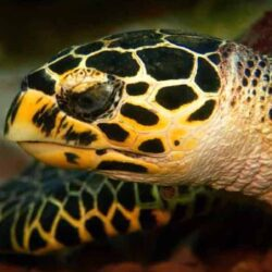 Turtle Time hawksbill-turtle-banner