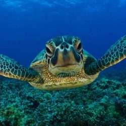 Turtle Time Kemp's Ridley Sea Turtle