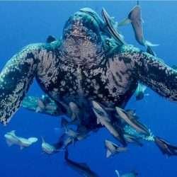 Turtle Time Leatherback Front On IG Alan E Egan