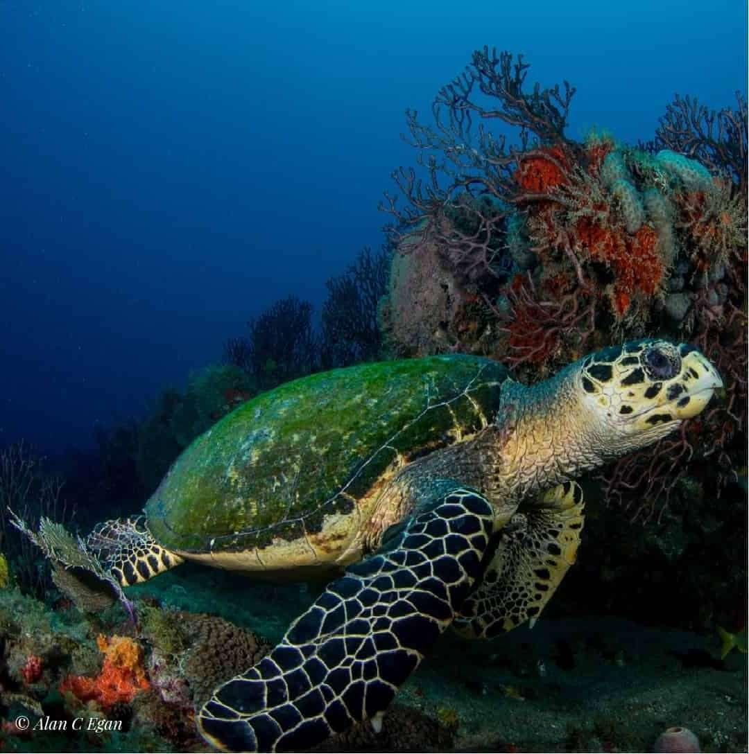 JDC Turtle at dusk Alan C Egan