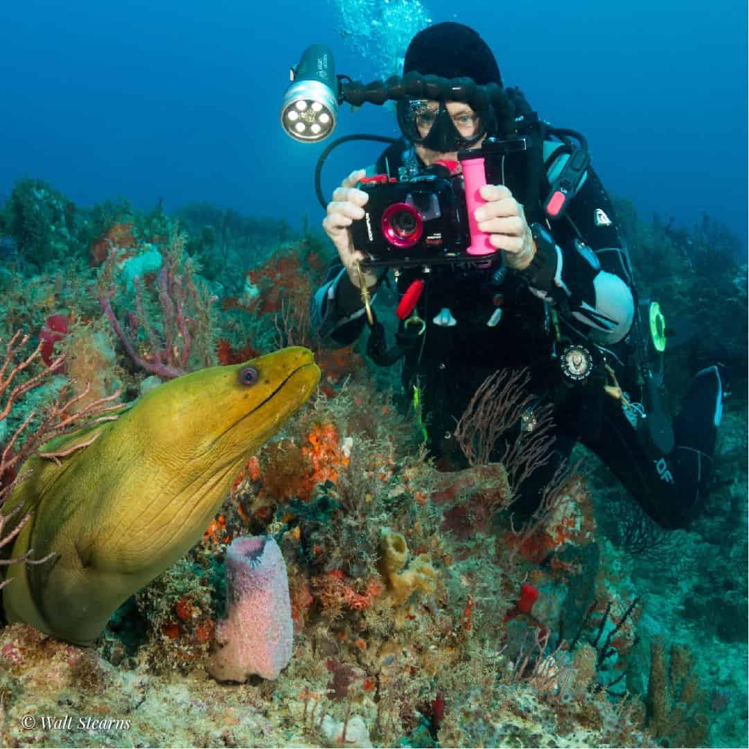JDC Women taking photo of green moray eel Walt Stearns