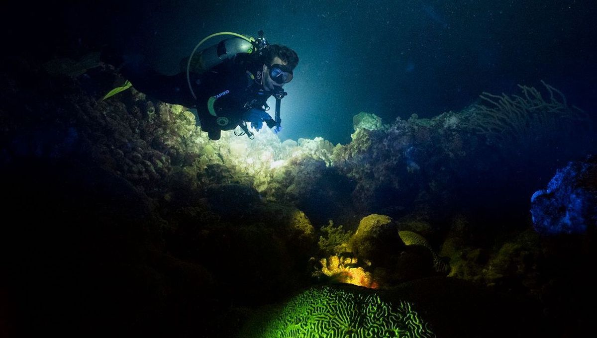 Diver on reef at night